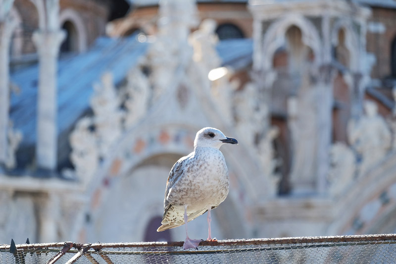Venice travel tips. Relais Piazza San Marco reviews by White Caviar Life.